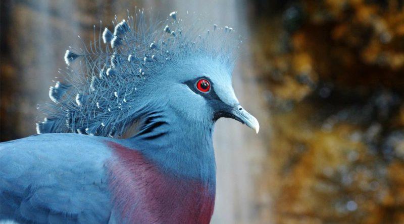 aves más hermosas del mundo